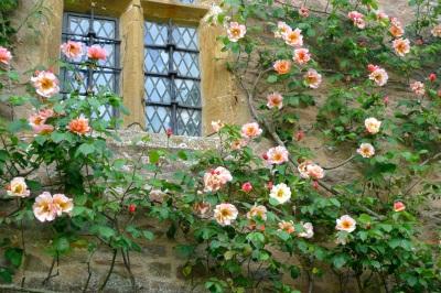 roses around windowP1030253